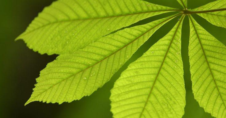 Formas das folhas. Folhas possuem uma variedade de formas, que é uma maneira de distinguir um tipo de árvore por meio de suas folhas. Você pode usar um guia para se familiarizar com as folhas enquanto aprende a identificar as diferentes formas e compreender os vários locais onde as diferentes folhas podem ser encontradas.