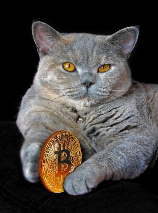 cât bitcoin