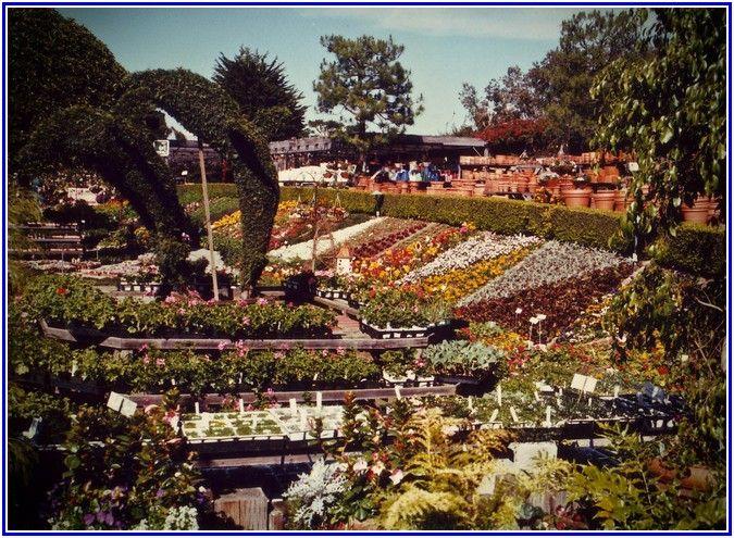 nice Rogers Gardens Landscape