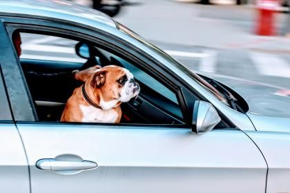 The essential guide to travelling with your dog