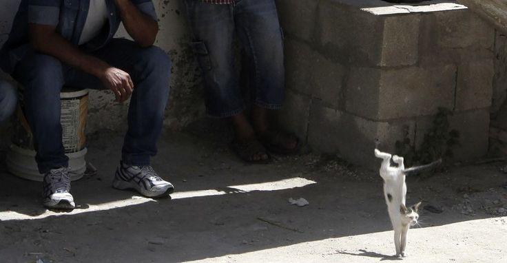 イスラエル・パレスチナ:ジェニン難民キャンプにて(2014年7月1日)