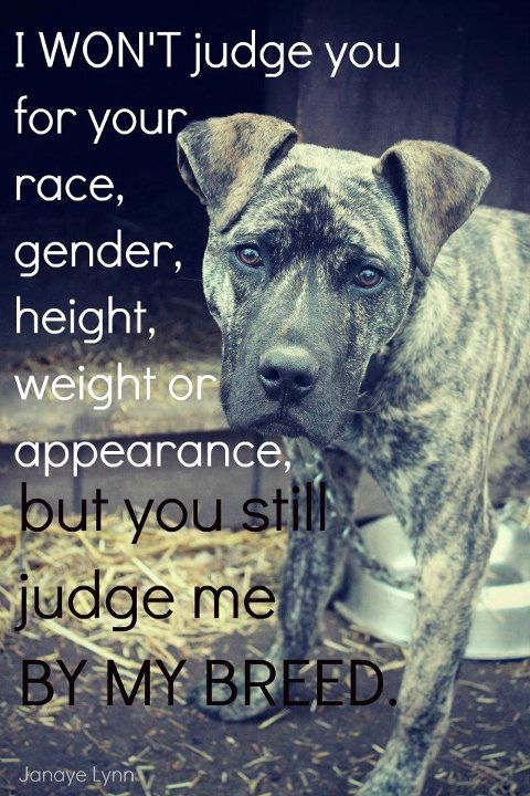 Don't judge by breed! This is Soo true & I was one of the judgemental until Bear. Bear won my heart & my love. I miss her everyday of my life & she was a pit. She thought she was a lap dog & loved her 2 sisters (a 3 lb. Yorkie & 10 lb Terrier). Thank you Bear for allowing me to be part of your family. I will post a picture shortly. Thanks you so much for this post.