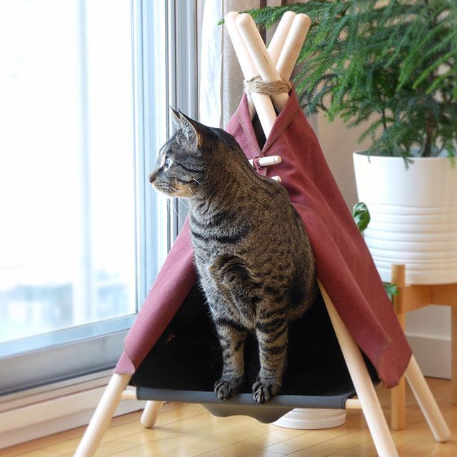 Hey Future Campurrs Keep Your Eyes Open For That Courier Theyre On The Way With Your Adventure Tent From Now On Adv With Images Cat Bed Cool Cat Trees Stylish