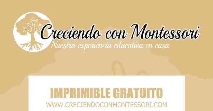 Mini llibre parts de la flor per a completar - CreciendoConMontessori -.pdf