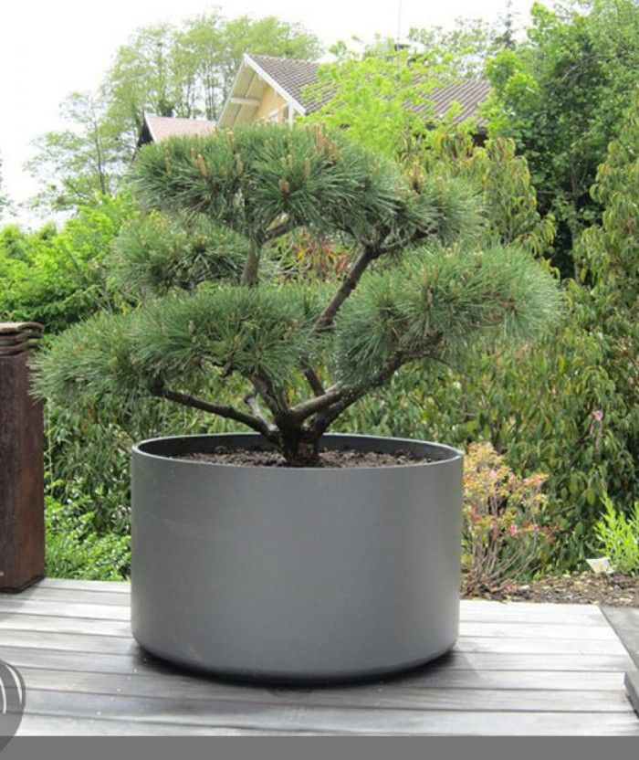 extra large round outdoor planter pot for bonsai tree or. Black Bedroom Furniture Sets. Home Design Ideas