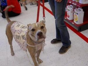 Abel is an adopted Pit Bull Terrier Dog in New Orleans, La.