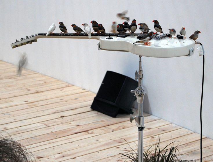 小鳥が奏でるノイズ・ミュージック~仏芸術家『セレスト・ブルシエ=ムジュノ』の謎音響世界 - A Challenge To Fate