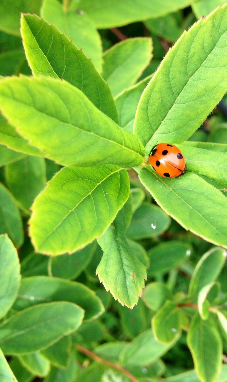 Ladybug! Aww