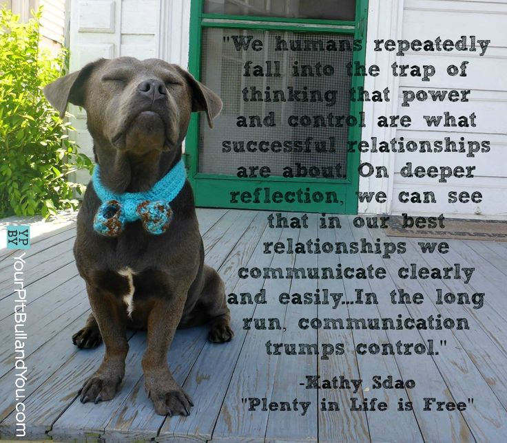 47 best Great Quotes images on Pinterest Doggies, Pit bull and - dog trainer sample resume