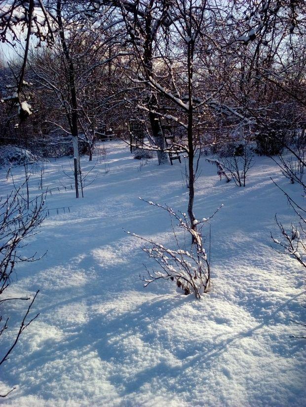 Zima w Polsce/Winter in Poland, Natura 15 241 (autor: jlez)