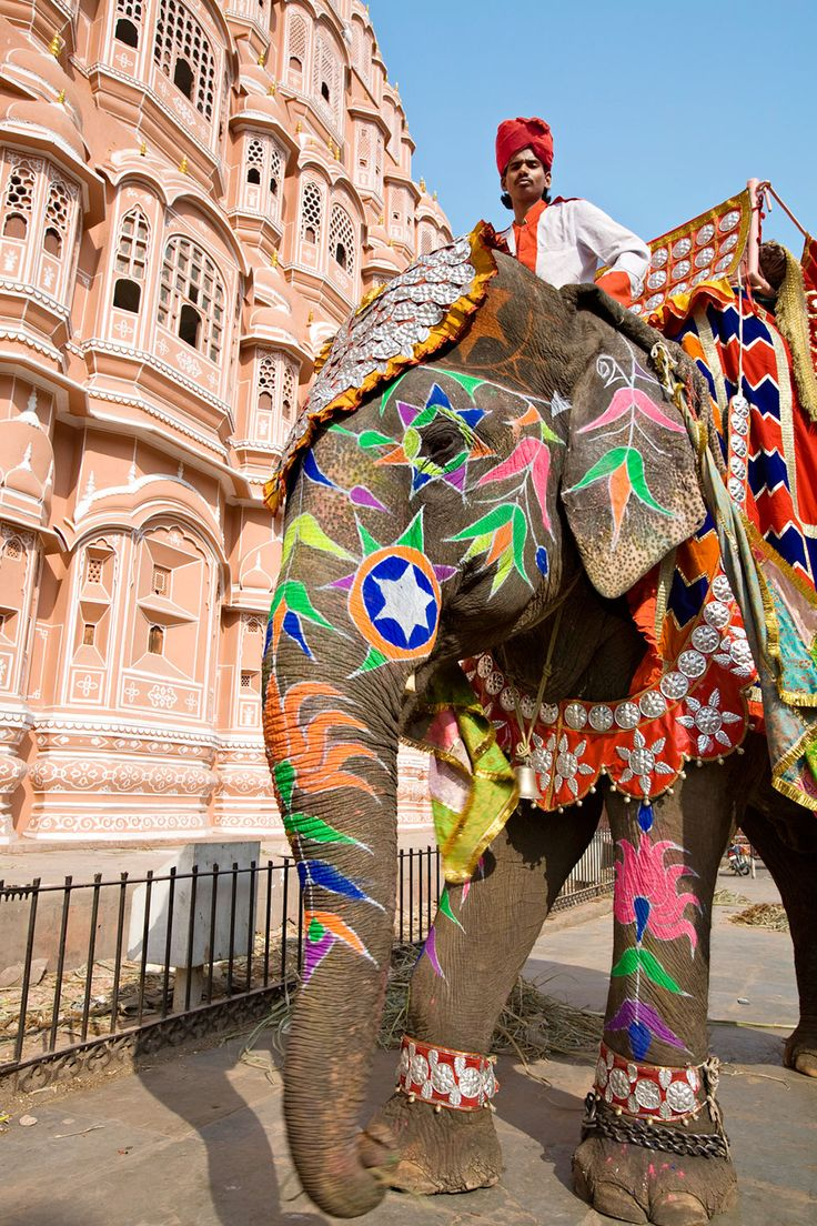 25 best ideas about painted indian elephant on pinterest