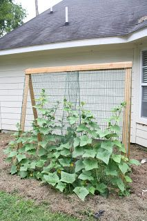 Garden Fencing Ideas find this pin and more on garden ideas Building A Cheap Garden Trellis