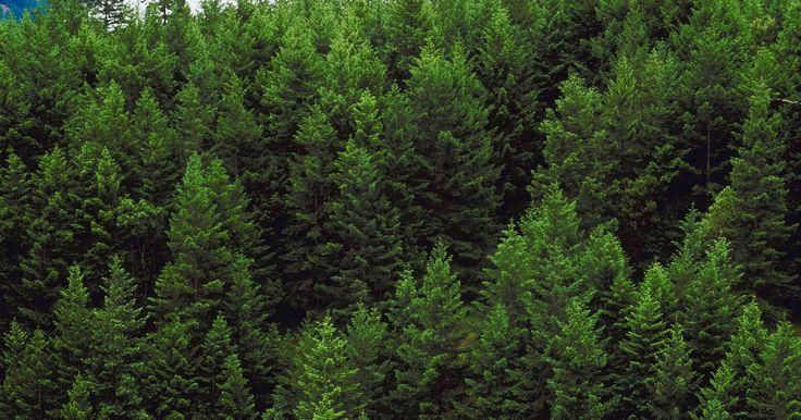 Cosas que podemos hacer cada día para detener la deforestación. La deforestación (la tala de árboles o eliminación del área boscosa) causa consecuencias de amplio alcance. Desde la destrucción del hábitat natural de millones de especies de animales y plantas hasta el calentamiento global y cambio climático, se debe controlar la deforestación a gran escala si queremos proteger y preservar el planeta. Puedes ...