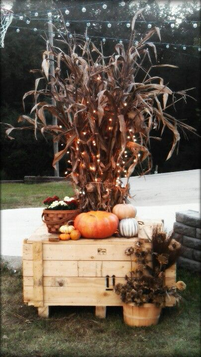 Cornstalks in a wooden crate. Pretty. Love the lights in the cornstalks.