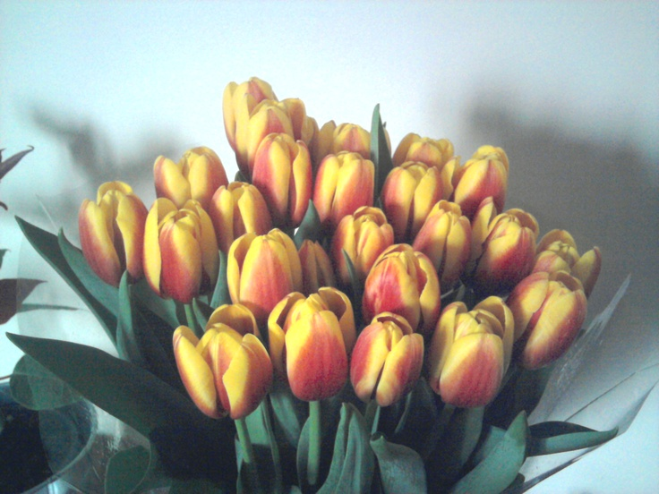 yellow and orange tulips: Yellow, Products