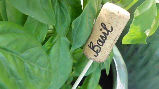 Turn Wine Corks into Plant Markers