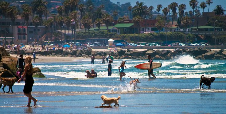 The Dog Beach at the North End of Ocean Beach in San Diego, California: We had so much fun here with my Schnoodle and stayed at the beach-side, dog-friendly Ocean Villa Inn!
