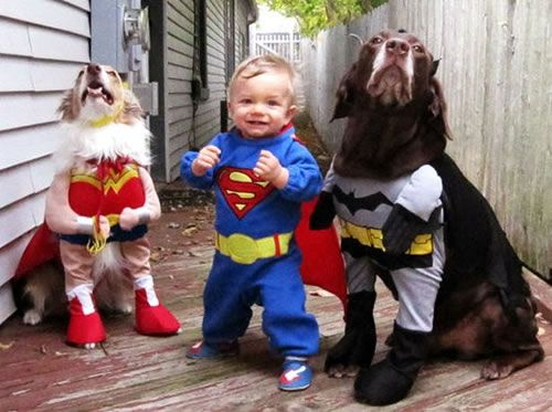 : Dogs, Halloween Costumes, Justiceleague, Superheroes, Kids, Super Heroes, Cute Costumes, Justice League, Animal