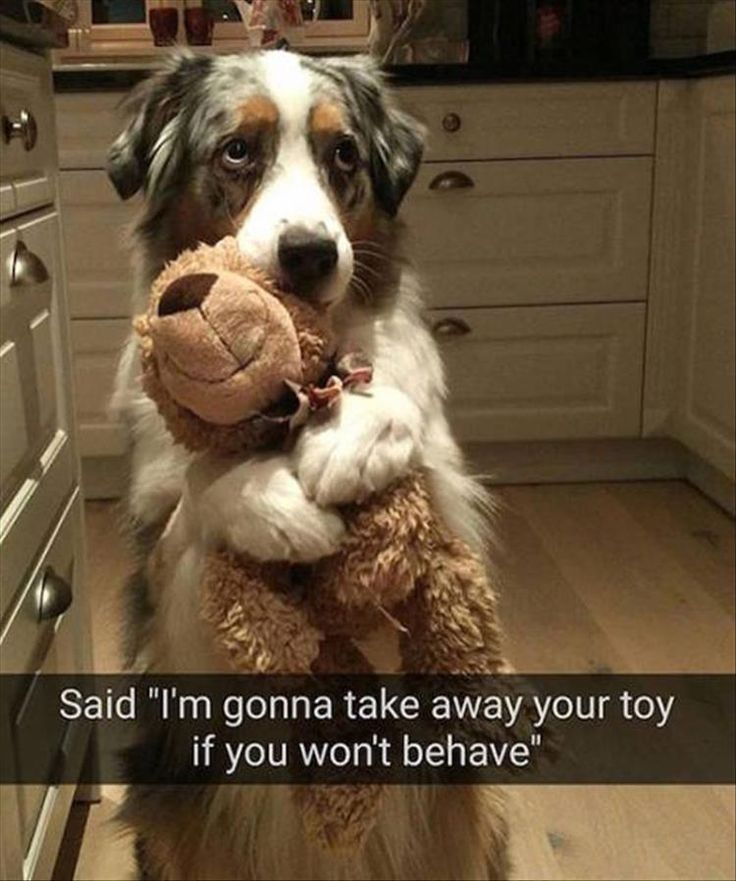 Morning Funny Animal Picture Dump 25 Pics