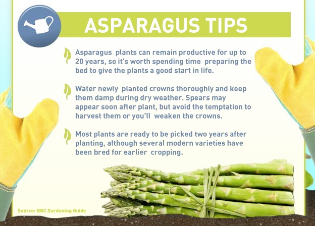 Asparagus tips | Gardening and Outdoor Spaces | Pinterest | Asparagus ...