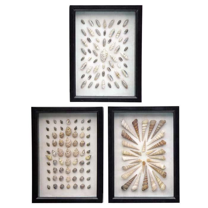 """This beautiful collection of shells are an elegant way to bring a touch of the coast to any space. A variety of shells are displayed in three small dark brown shadowboxes. Because natural shells are used, the shell type and layout will vary. Sold as a set of 3 only.   <a href=""""http://www.shopcandelabra.com/as-seen-in-5"""">As seen in Elle Decor</a>."""