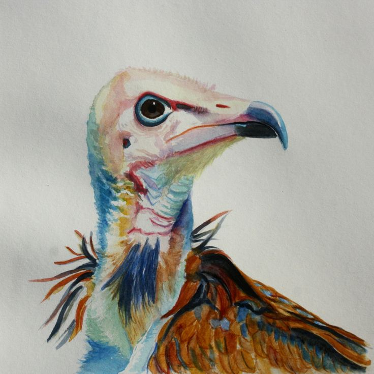 Water colour Bird painting. Hooded Vulture