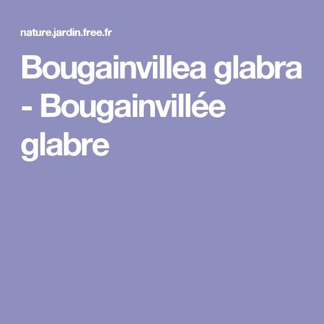 Bougainvillea glabra - Bougainvillée glabre