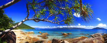 Image result for australian landscape photography forest