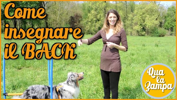 Addestramento/Educazione cani n° 18 - Come insegnare il BACK   Qua la Zampa