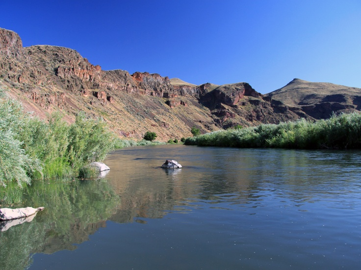 43 best idaho fly fishing images on pinterest fishing for Owyhee river fishing report