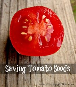 Saving tomato seeds garden ideas pinterest