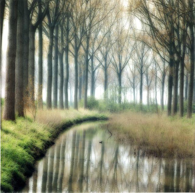 Lynn Geesaman, 'Damme, Belgium (4-04-5c-4),' 2004, Yancey Richardson Gallery