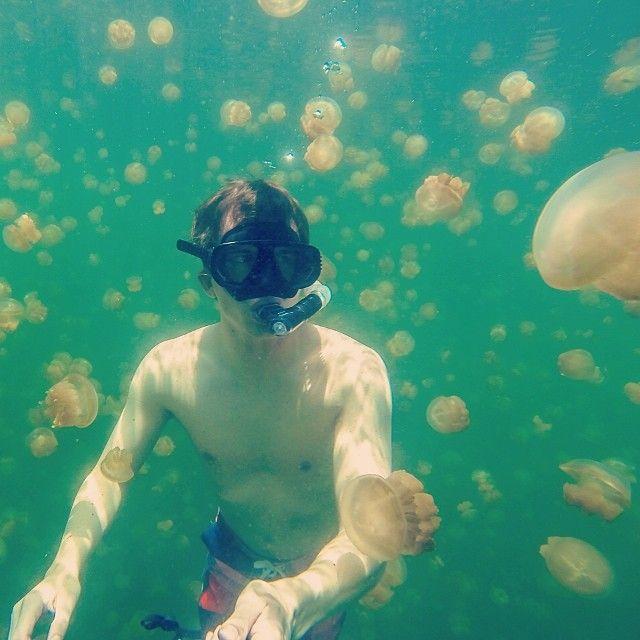 Koror State itt: Koror Jellyfish lake