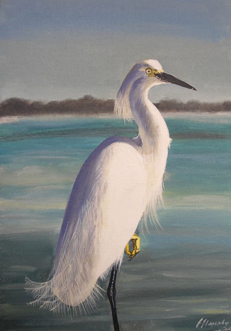 762 best egrets images on pinterest beautiful birds for White heron paint