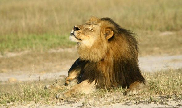 Cecil the Lion was brutally killed (July 2015) three months after another lion in the same Zimbabwean park.