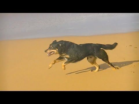 ▶ Dog Running In Epic Slow Motion 2 [HD] - YouTube