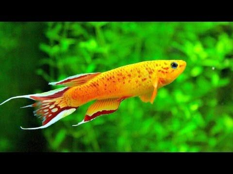 98 best entertainment music relaxing images on for Cool pet fish