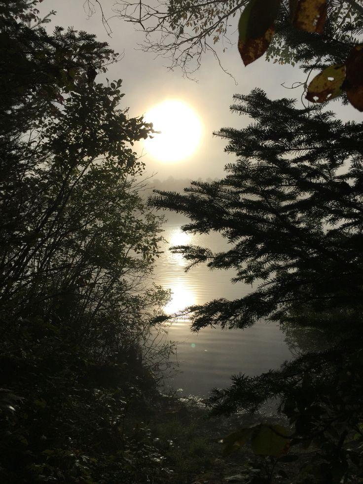 Island pond morning fog