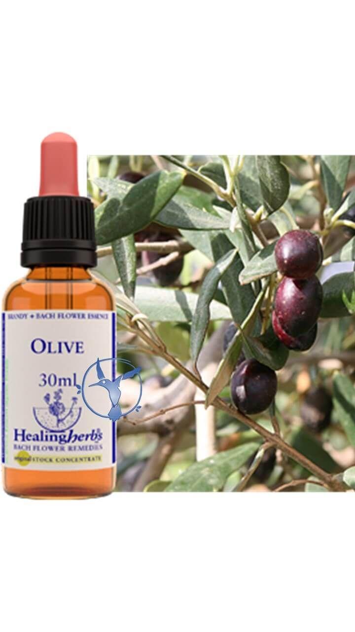 #floresdebach #olive #remedies #remedios #español #beneficios #agotamiento #cansancio #estres #energia #vitalidad #salud #terapiasalternativas  #healing #herbs