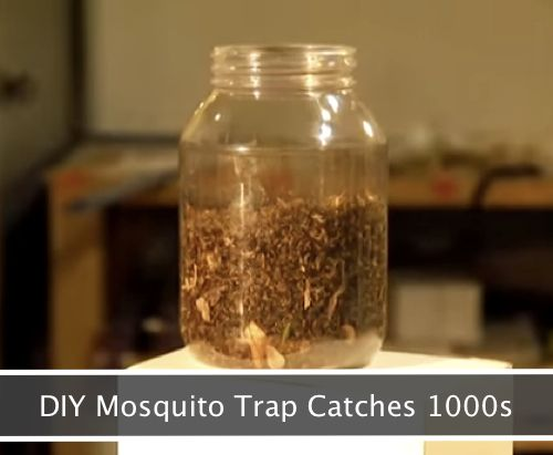DIY Mosquito Trap That Will Catch 1000s...http://homestead-and-survival.com/diy-mosquito-trap-that-will-catch-1000s/