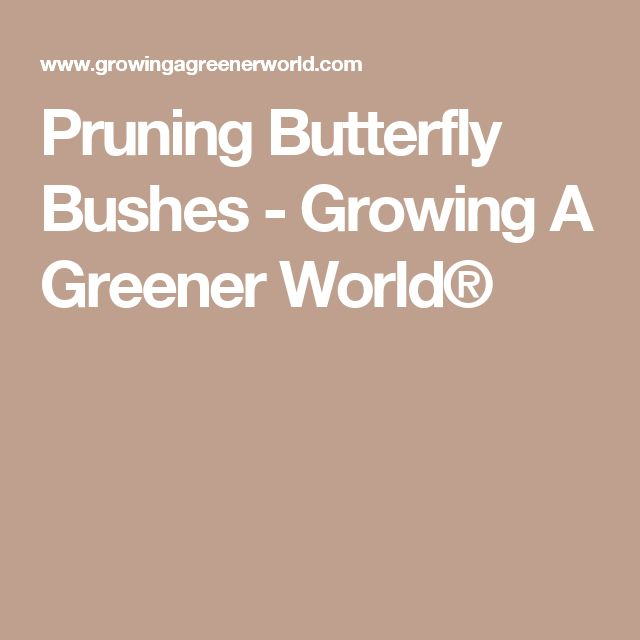 Pruning Butterfly Bushes - Growing A Greener World®