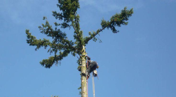 Quel est le prix d'abattage d'un arbre ? : http://www.travauxbricolage.fr/travaux-exterieurs/jardin-paysagisme/prix-abattage-arbre/