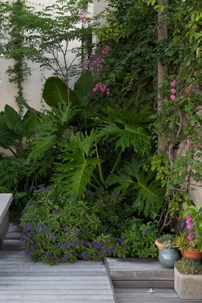 tropical garden project bantry