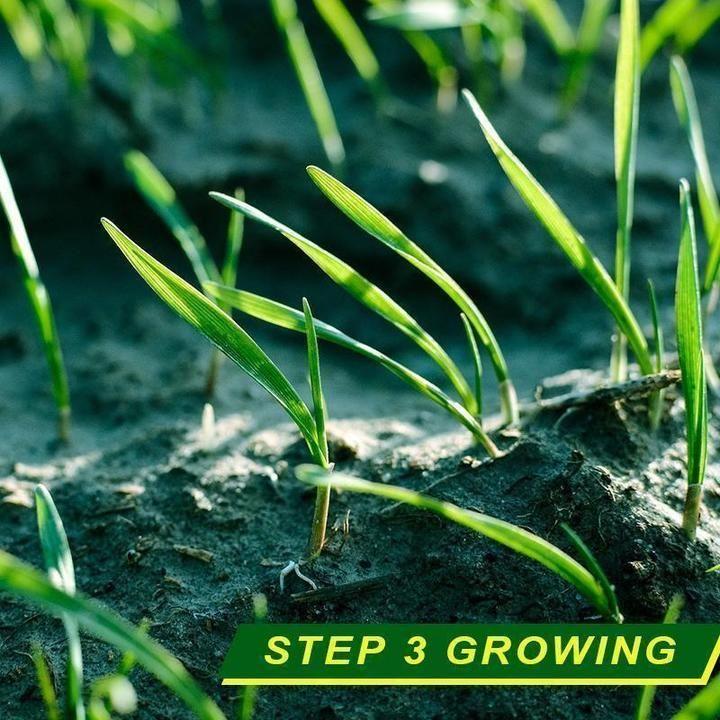 Biodegradable Grass Seed Mat In 2020 Grass Seed Mat Grass Seed Plants