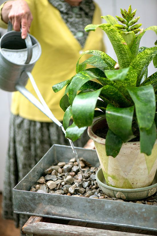 A pebble tray is an effective means of increasing humidity immediately around plants.