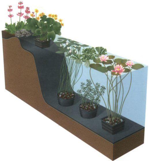Plantschema voor vijverplanten