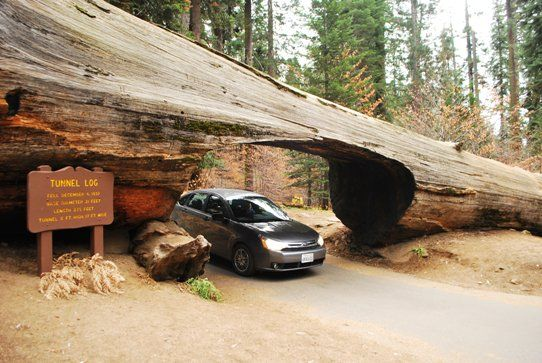 The Largest Tree In The World – The General Sherman Tree