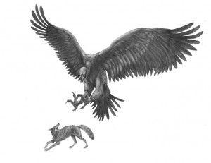 thunderbird legend sightings - Google Search