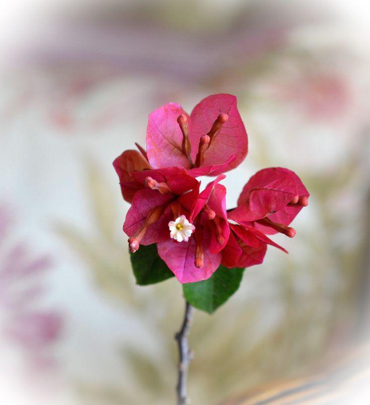 Flor - Trinitaria Bougainvillea