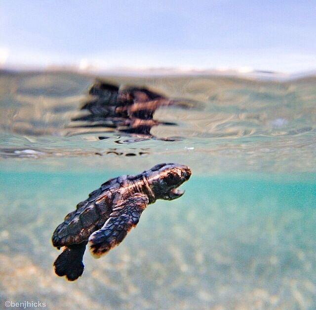 Süße kleine wasserschildkröte